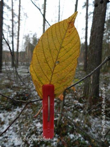 Открываю сезон с фоторепортажа.В воскресенье с подругой были в лесу.Там так красиво.Осень встретилась с Зимой на нейтральной территории.Результат этой встречи я и запечетлила на фотик.  фото 19