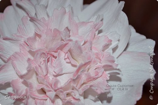 Здравствуйте,Страна Мастеров!!!  Вас приветствую, я Ольга Сыротюк (псевдоним Сафинка)   Предлагаю вашему вниманию свой мастер класс по созданию милого,нежного пиона...из Фоама...  Пион- цветок любви и нежности... фото 35