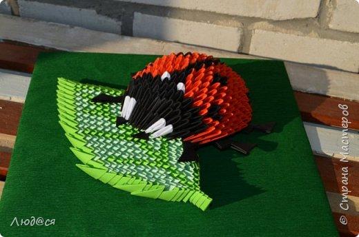 Картина панно рисунок Мастер-класс Оригами китайское модульное Божья коровка или сонечко-жучок Бумага Клей фото 16