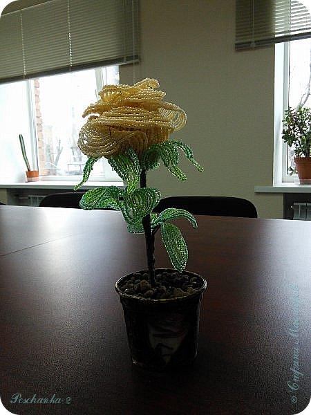 Моя первая бисерная роза фото 4