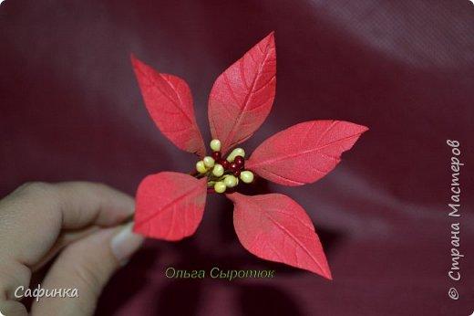 Привет всем!!! и вот..снова я,Ольга Сыротюк с Вами...  Скоро Новый год и Рождество...Пора задуматься о подарках и украшениях к самым чудесным и  волшебным праздникам....А вы уже готовите подарки себе и близким? Если нет...то я предлагаю сегодня вместе с вами создать волшебный рождественский цветок... Вдохновение на создание этого цветка,я получила на онлайн-конференции от Марины Мартьяновой....Мариночка,спасибо )))) И вот,пока вдохновение не покинуло, решила создать МК Пуансетии для вас мои дорогие...пыталась приблизится к реальности цветка И так кому интересно, и уже загорелся...в бой  фото 12