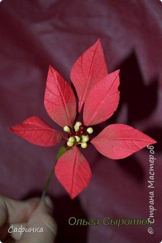 Привет всем!!! и вот..снова я,Ольга Сыротюк с Вами...  Скоро Новый год и Рождество...Пора задуматься о подарках и украшениях к самым чудесным и  волшебным праздникам....А вы уже готовите подарки себе и близким? Если нет...то я предлагаю сегодня вместе с вами создать волшебный рождественский цветок... Вдохновение на создание этого цветка,я получила на онлайн-конференции от Марины Мартьяновой....Мариночка,спасибо )))) И вот,пока вдохновение не покинуло, решила создать МК Пуансетии для вас мои дорогие...пыталась приблизится к реальности цветка И так кому интересно, и уже загорелся...в бой  фото 13