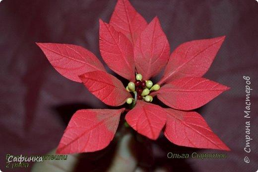 Привет всем!!! и вот..снова я,Ольга Сыротюк с Вами...  Скоро Новый год и Рождество...Пора задуматься о подарках и украшениях к самым чудесным и  волшебным праздникам....А вы уже готовите подарки себе и близким? Если нет...то я предлагаю сегодня вместе с вами создать волшебный рождественский цветок... Вдохновение на создание этого цветка,я получила на онлайн-конференции от Марины Мартьяновой....Мариночка,спасибо )))) И вот,пока вдохновение не покинуло, решила создать МК Пуансетии для вас мои дорогие...пыталась приблизится к реальности цветка И так кому интересно, и уже загорелся...в бой  фото 14