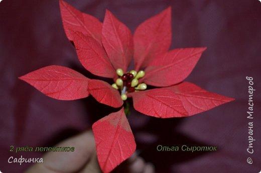 Привет всем!!! и вот..снова я,Ольга Сыротюк с Вами...  Скоро Новый год и Рождество...Пора задуматься о подарках и украшениях к самым чудесным и  волшебным праздникам....А вы уже готовите подарки себе и близким? Если нет...то я предлагаю сегодня вместе с вами создать волшебный рождественский цветок... Вдохновение на создание этого цветка,я получила на онлайн-конференции от Марины Мартьяновой....Мариночка,спасибо )))) И вот,пока вдохновение не покинуло, решила создать МК Пуансетии для вас мои дорогие...пыталась приблизится к реальности цветка И так кому интересно, и уже загорелся...в бой  фото 15