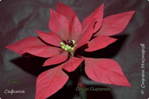 Привет всем!!! и вот..снова я,Ольга Сыротюк с Вами...  Скоро Новый год и Рождество...Пора задуматься о подарках и украшениях к самым чудесным и  волшебным праздникам....А вы уже готовите подарки себе и близким? Если нет...то я предлагаю сегодня вместе с вами создать волшебный рождественский цветок... Вдохновение на создание этого цветка,я получила на онлайн-конференции от Марины Мартьяновой....Мариночка,спасибо )))) И вот,пока вдохновение не покинуло, решила создать МК Пуансетии для вас мои дорогие...пыталась приблизится к реальности цветка И так кому интересно, и уже загорелся...в бой  фото 17