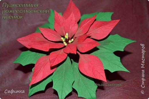 Привет всем!!! и вот..снова я,Ольга Сыротюк с Вами...  Скоро Новый год и Рождество...Пора задуматься о подарках и украшениях к самым чудесным и  волшебным праздникам....А вы уже готовите подарки себе и близким? Если нет...то я предлагаю сегодня вместе с вами создать волшебный рождественский цветок... Вдохновение на создание этого цветка,я получила на онлайн-конференции от Марины Мартьяновой....Мариночка,спасибо )))) И вот,пока вдохновение не покинуло, решила создать МК Пуансетии для вас мои дорогие...пыталась приблизится к реальности цветка И так кому интересно, и уже загорелся...в бой  фото 20