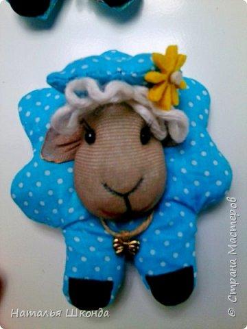 мои овечки фото 2