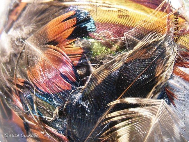 Давно хотела сделать такие вот необычные новогодние шары. Такая палитра красок никого не может оставить равнодушным.Природа постаралась наряжая птиц..Давно коллекционирую перья птиц и вот сделала такие  волшебные шары. Конечно фото не может передать всей красоты и всех переливов природных красок. Надеюсь что вы полюбуетесь вместе со мной , таким эко нарядом. фото 11