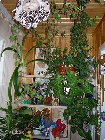 Вот такой у меня на балконе разместился зимний садик.