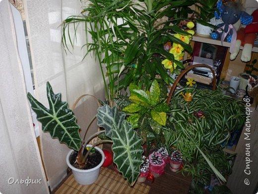 Вот такой у меня на балконе разместился зимний садик. фото 4