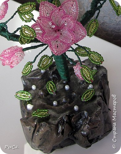 Розовое дерево фото 4