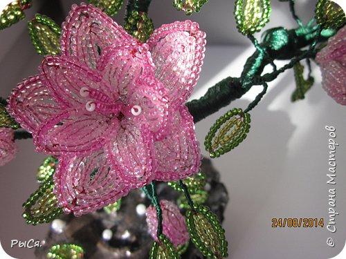 Розовое дерево фото 6