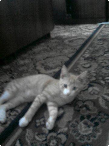 Это мой котик Хвостик. Живёт у нас уже 2 годика а взяли мы его когда ему было всего лишь 2 -2,5 месяца.  фото 4