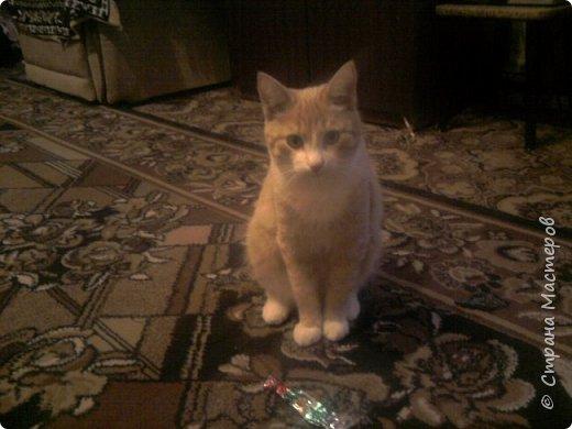 Это мой котик Хвостик. Живёт у нас уже 2 годика а взяли мы его когда ему было всего лишь 2 -2,5 месяца.  фото 1