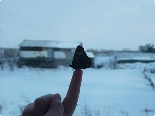 За окошком снег да снег.А нам так захотелось лета, цветов и и конечно бабочек. Вот так и появились эти работы. фото 4
