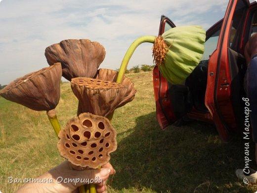 Рада приветствовать всех жителей нашей прекрасной Страны Мастеров! В предверии Нового года это, пожалуй, моя последняя работа. Делала эту композицию для своей любимой невестки. Использовала высушенный гриб- трутовик, высушенные коробочки лотоса и древовидных пионов, иск. зелень. фото 4