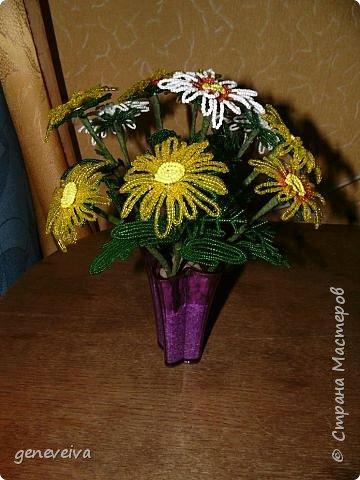 Моя первая орхидея фото 17