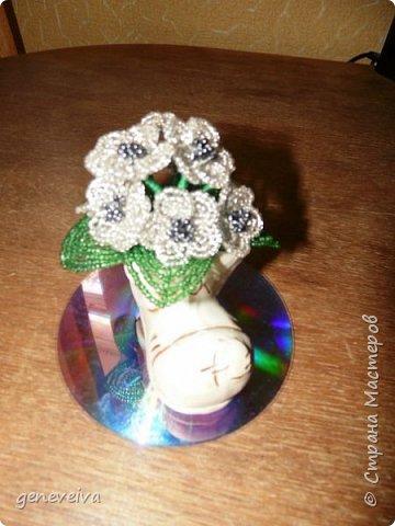 Моя первая орхидея фото 15