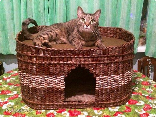 Плетение из газет кошкин дом. Домик для кошки из газет: инструкция по плетению