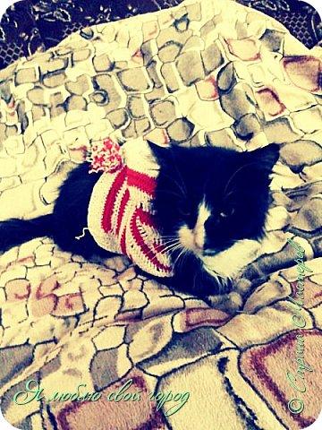 Как я уже писала я занимаюсь вязание крючком.С недавнего времени вяжу кофточки(свитера) для моей собаки Партоса,но ещё у меня есть 2 кота и им я тоже связала свитера на Новый год,в качестве подарка.На 1 фотографии мой любимчик Маркиз,ему я связала первую кофту.Она красно-белая,как у помощников Санты.На капюшоне помпон.