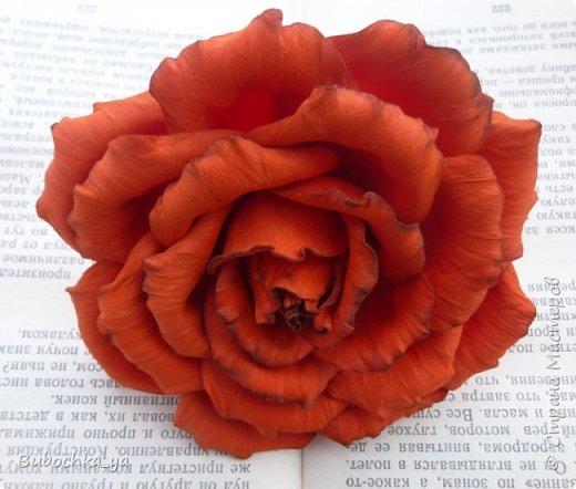 Такая пионовидная роза родилась вчера ночью)) Она станет призом для конкурсантов! фото 5