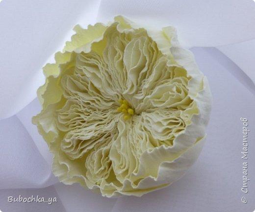 Такая пионовидная роза родилась вчера ночью)) Она станет призом для конкурсантов! фото 1
