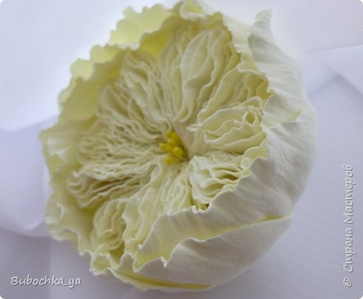 Такая пионовидная роза родилась вчера ночью)) Она станет призом для конкурсантов! фото 2