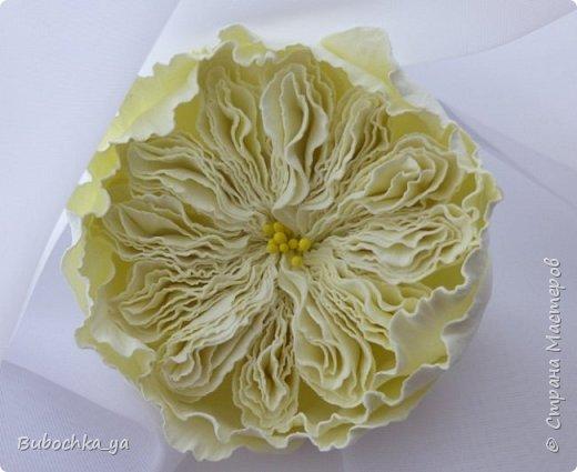 Такая пионовидная роза родилась вчера ночью)) Она станет призом для конкурсантов! фото 3