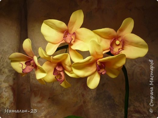 Новые орхидеи из фома... фото 4