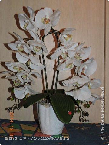Орхидея из латекса,цветы очень похожи на натуральные.Можно мыть под душем или протирать как обычные комнатные цветы. Будет радовать свою хозяйку цветением круглый год. фото 1