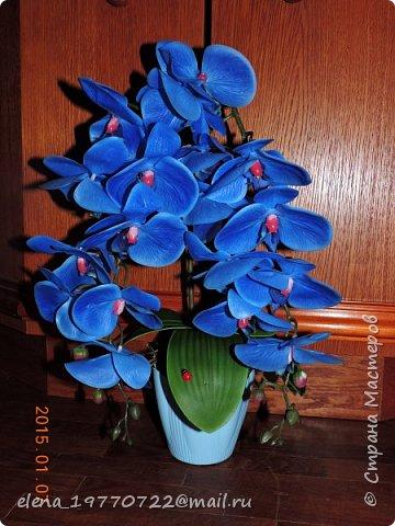 Орхидея из латекса,цветы очень похожи на натуральные.Можно мыть под душем или протирать как обычные комнатные цветы. Будет радовать свою хозяйку цветением круглый год. фото 2