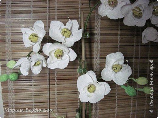 Мастер-класс по созданию прекрасной орхидеи с конфетами. фото 10