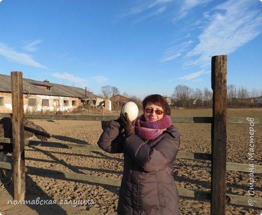 На 50-летний юбилей мужа, я подарила ему путевку на новогодние праздники в Карпаты, естественно на два человека ,т.е на него и себя)).Приехали мы в Прикарпатье 30 декабря утром. Вот такой красотой нас встретили горы. фото 26