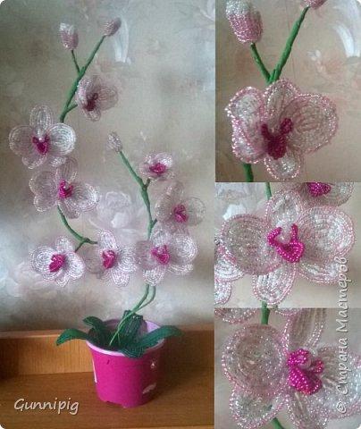 Моя коллекция орхидей)) фото 6