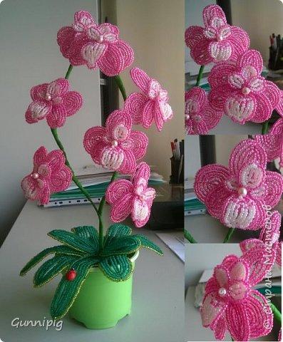 Моя коллекция орхидей)) фото 2