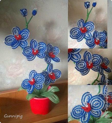Моя коллекция орхидей)) фото 5