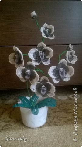 Моя коллекция орхидей)) фото 8