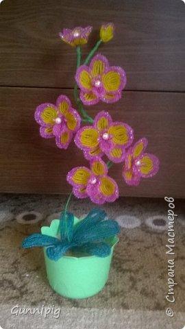 Моя коллекция орхидей)) фото 7
