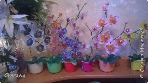 Моя коллекция орхидей)) фото 1