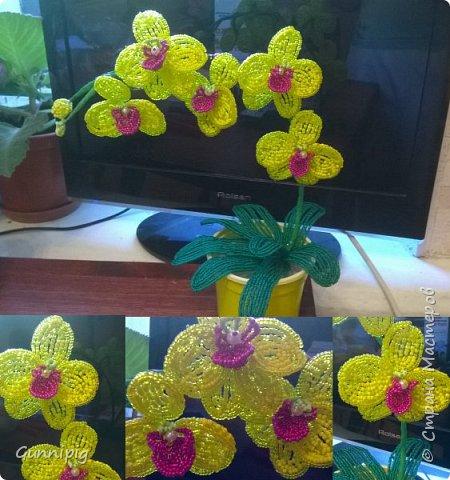 Моя коллекция орхидей)) фото 3