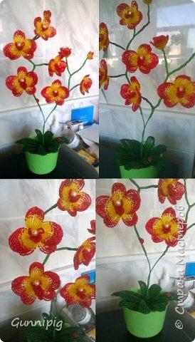 Моя коллекция орхидей)) фото 9