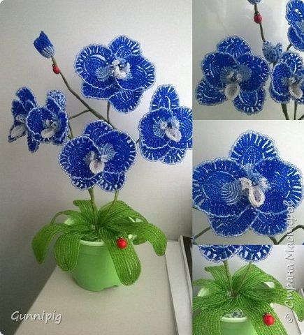 Моя коллекция орхидей)) фото 10