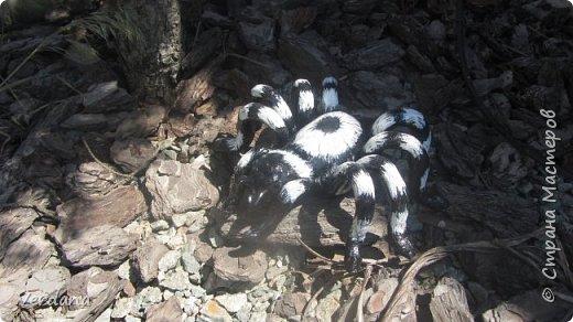 Паук, размер 15 см от головы до основания брюшка. Материал глина - шамот, краска - акрил.  Очень неплохо вписался в ландшафт у меня на участке (отпугивает настоящих :))))))).   фото 2
