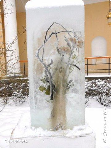 Необычная выставка цветов  прошла в дни новогодних праздников в Павловском парке под Петербургом фото 14