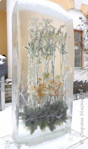 Необычная выставка цветов  прошла в дни новогодних праздников в Павловском парке под Петербургом фото 1