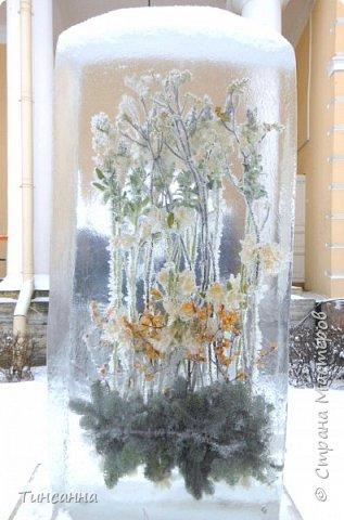 Необычная выставка цветов  прошла в дни новогодних праздников в Павловском парке под Петербургом фото 5