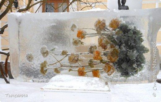 Необычная выставка цветов  прошла в дни новогодних праздников в Павловском парке под Петербургом фото 8