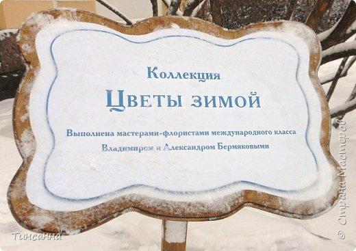 Необычная выставка цветов  прошла в дни новогодних праздников в Павловском парке под Петербургом фото 2
