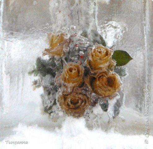 Необычная выставка цветов  прошла в дни новогодних праздников в Павловском парке под Петербургом фото 22