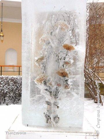 Необычная выставка цветов  прошла в дни новогодних праздников в Павловском парке под Петербургом фото 12